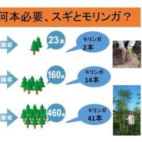 緊急事態に対応できる植林は?