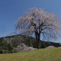 2019年4月 桜