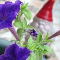 SHOUT!ツアー19番河内長野ラブリーホールに紫星4つ添えて