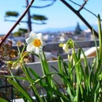 春は近い。