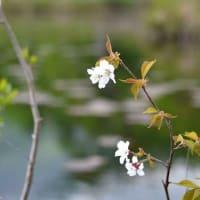 5184 白い花
