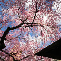 2019年春の京都・水火天満宮の壁紙(計11枚)
