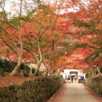 京都-興聖寺