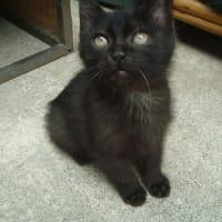 黒子猫も環境に馴染んできた