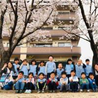 ぞう組⭐︎桜の木の下で…