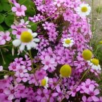 ピンクの小花が可愛い花