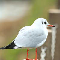冬鳥を撮るⅢ