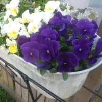 昨日の続きの庭