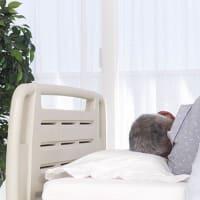60歳の介護インターンシップ