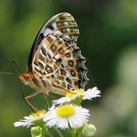 梅雨晴れに飛び交う蝶