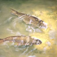 鯉の絵・パステル画とちゃいます。