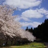 春さんぽ②