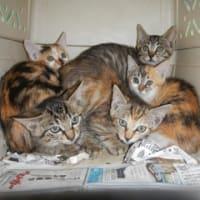 子猫6匹預かりさんのお家へ