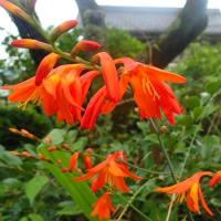 河井夫妻起訴 首相は疑念に応えよ/庭の花。薄紫のセイヨウニンジンボク、紅白の源平シモツケ、