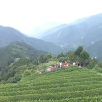 2020.6/13-14 茶摘み/手揉み茶作り+大谷崩れトレッキングツアー中止のお知らせ