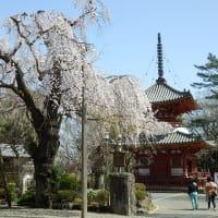 桜見て水琴窟を見つけたり(喜多院・小江戸川越七福神第3番)