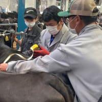 農業研究組織「若牛会」の取組を支援しています。