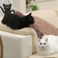 猫が避難した理由