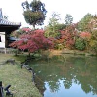京都旅行~高台寺・圓徳院編~