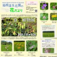 箱根湿生花園 花だより(2021年7月15日発行)