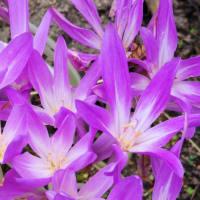 我が家で咲く花など