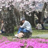 カメラを持って鶴山へ・・・