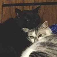 仲良し猫(ココアとユリネ)