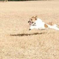 愛犬「櫂」の紹介(笑)