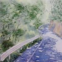 木洩れ日模様の林道