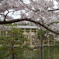 けいはんな記念公園の桜