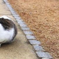 2つの顔を持つ野良ネコに会う!キメラ猫? おまけに犬も?