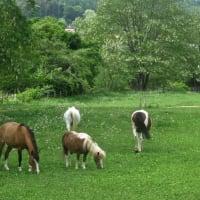 馬の教室のお知らせ