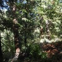 2019年6月16日 滝山城跡景観回復・維持作業 「前に出すぎは転落注意!」