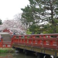 4 / 2 めぐり~称名寺の桜 (1)