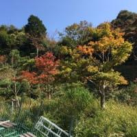 京都 天橋立と黒竹輪作り