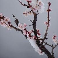 2020/03/29 (日) 雪の朝