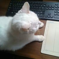 マウスパッドをニャ、ずらしてみたニャう。