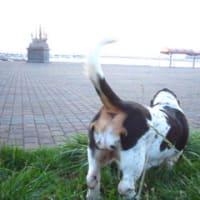 愛犬、それは愛すべき犬