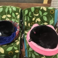 二個の黒饅頭