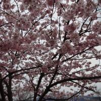 平成31年4月の東北の家庭料理と食卓の折り紙(旧広瀬川のめだかの学校)