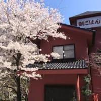 2015年 桜が咲きました。