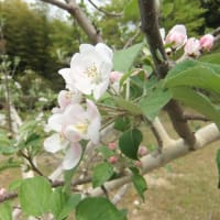 アーモンド りんご ゆり