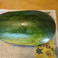 西瓜の栽培