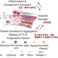新型コロナウイルス感染症COVID-19:最新エビデンスの紹介(10月18日)