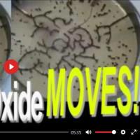 """動画:電磁波を照射されて不気味に動く """"酸化グラフェン"""""""