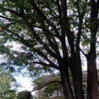 大きな欅の木陰で