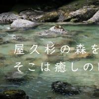動画【屋久島登山】屋久杉の森を散策。そこは癒しの時間! IN ヤクスギランド