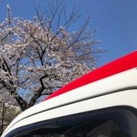 稲城市:桜花爛漫