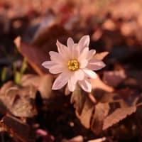 神代植物公園で春探し(2020.2.12)