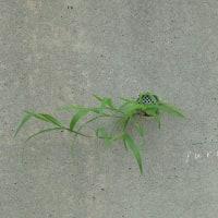 たくましい雑草